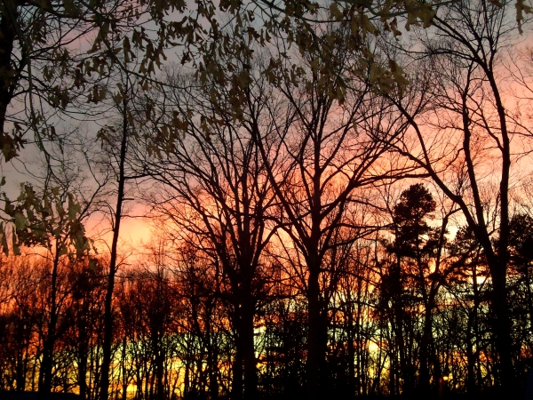 Winter sunset out my backdoor. Hand painted by God. Incredible.
