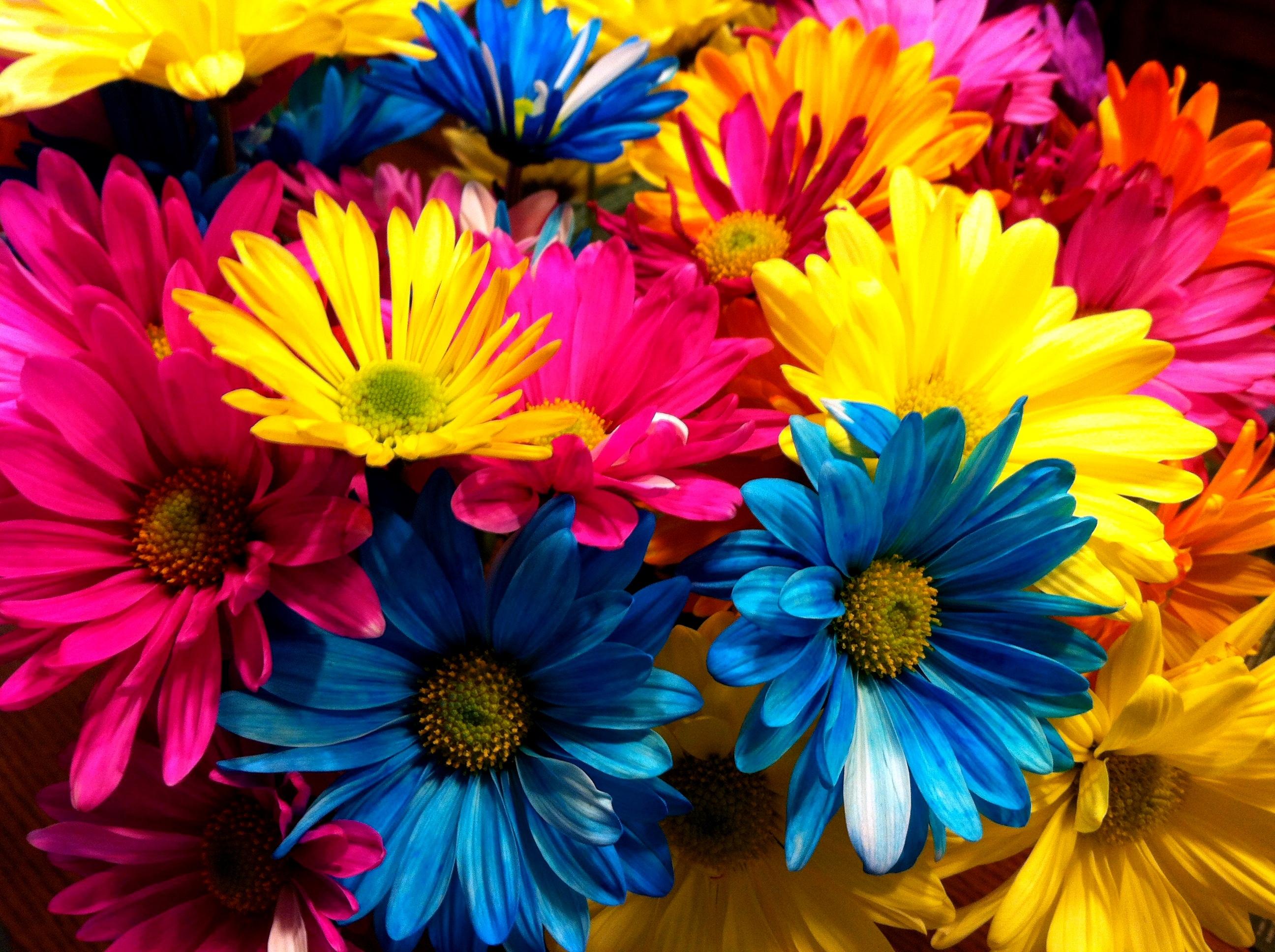 Nature color simplysage for Bouquet de fleurs nature