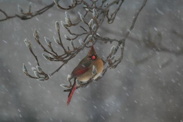 Cardinal Weathers the Storm
