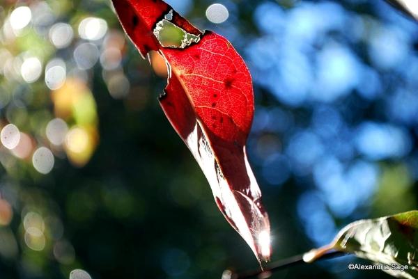 Glistening October