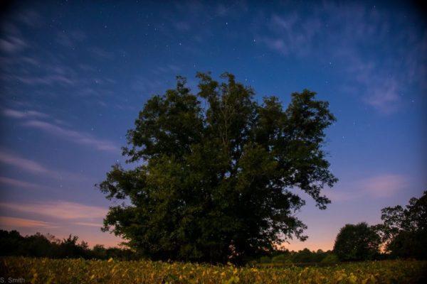 Sky Lights img_7353